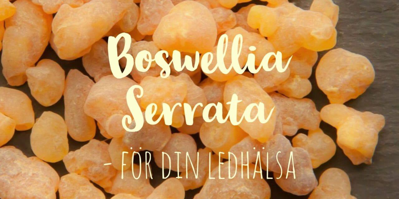 Boswellia Serrata: En fantastisk ört med smärtlindrande egenskaper