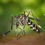 Så hittar myggorna dig!