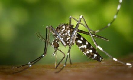 Så här gör myggorna för att hitta dig!