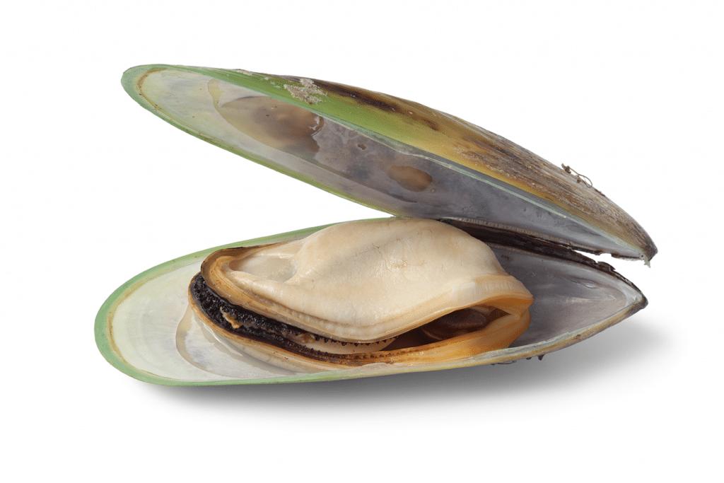 gronlappad mussla