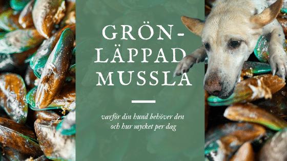 gronlappad mussla till hund