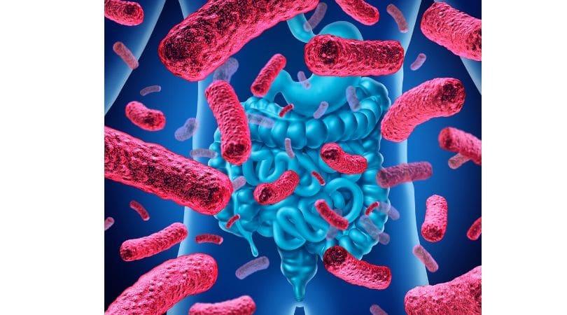 immunforsvar tarm
