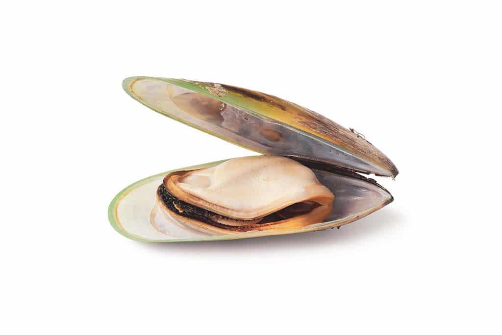 grönläppad-mussla